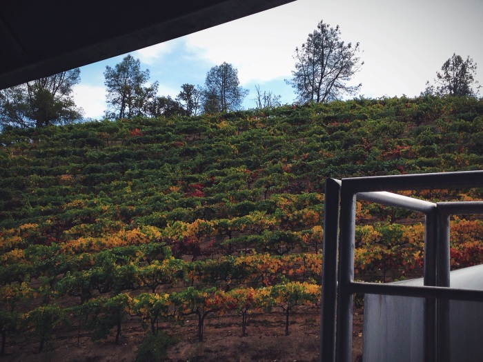 "View of petite syrah vines from ""the office"""