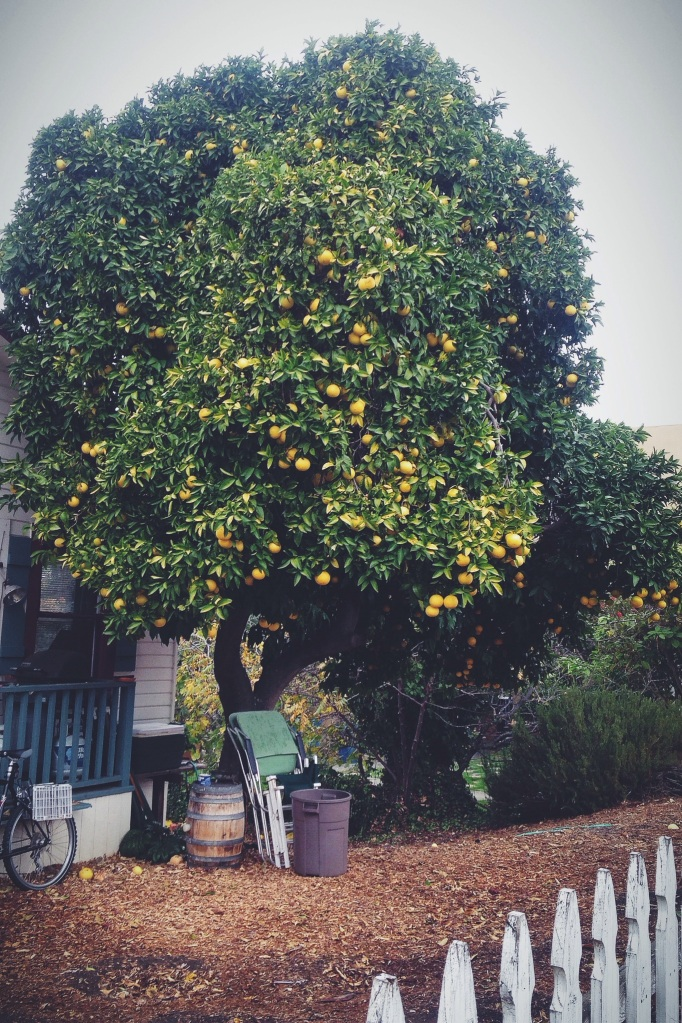 If I were Bob Ross (but me, you know what I mean), my happy little trees would all be citrus.