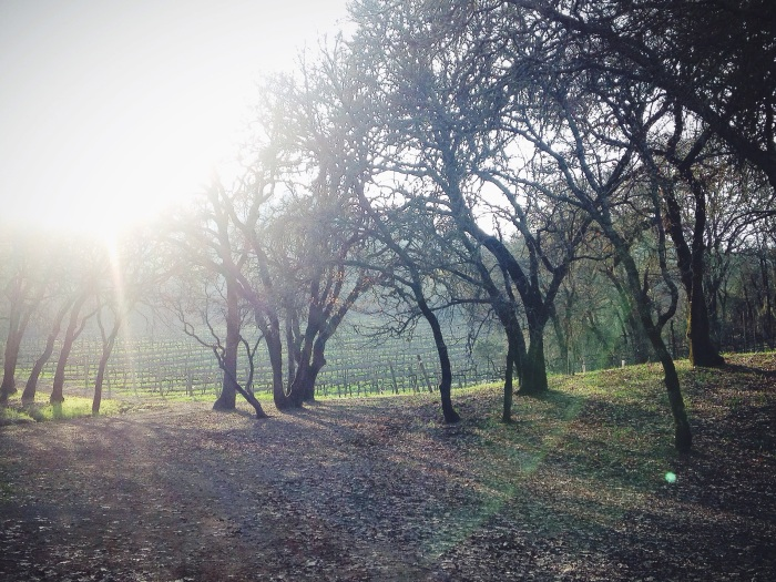 That kiss of sunlight over the Sonoma vines.