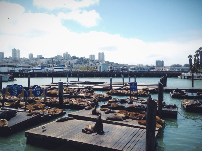 The gangs all here at Pier 39!