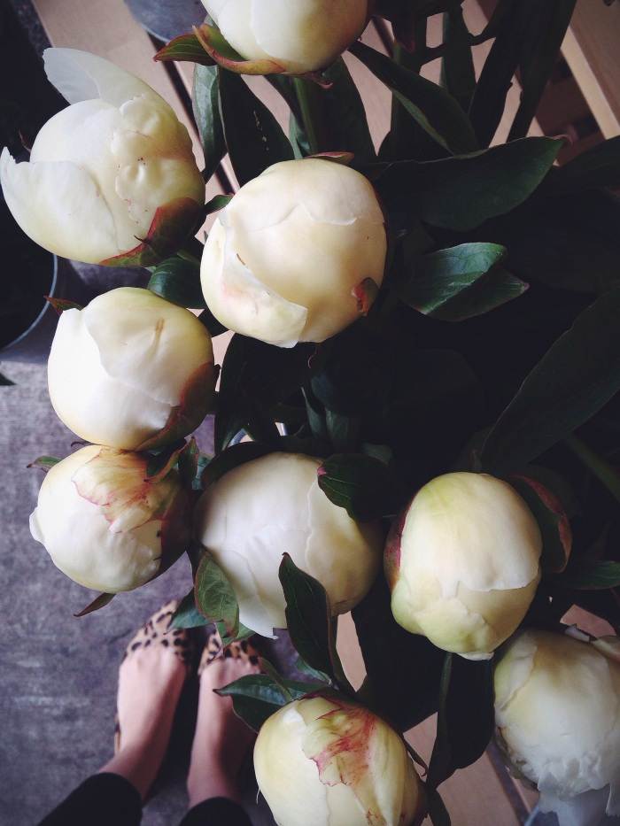 PEONIES! It's that time of year and I love it, bring on the Instagram peony takeover